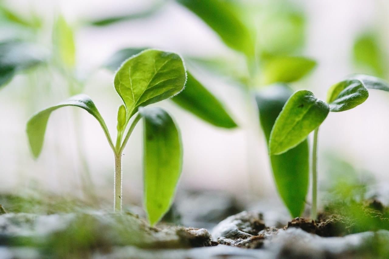 finance biodiversité